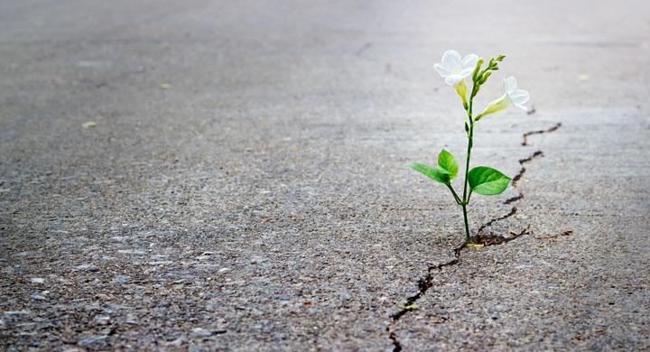 Pflanzen die aus eine Betonriss wächst