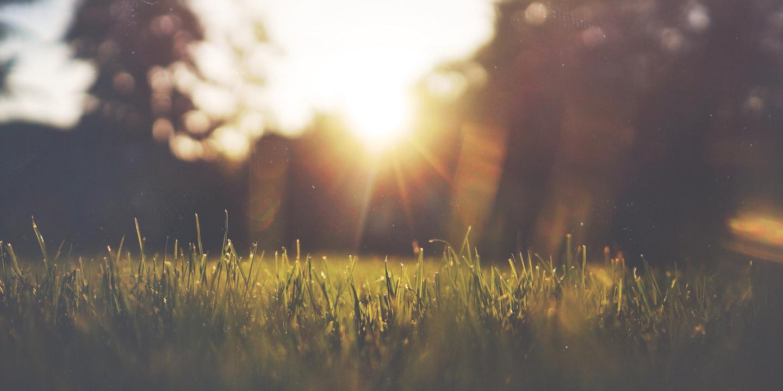 Aufgehende Sonne bescheint die Wiese.